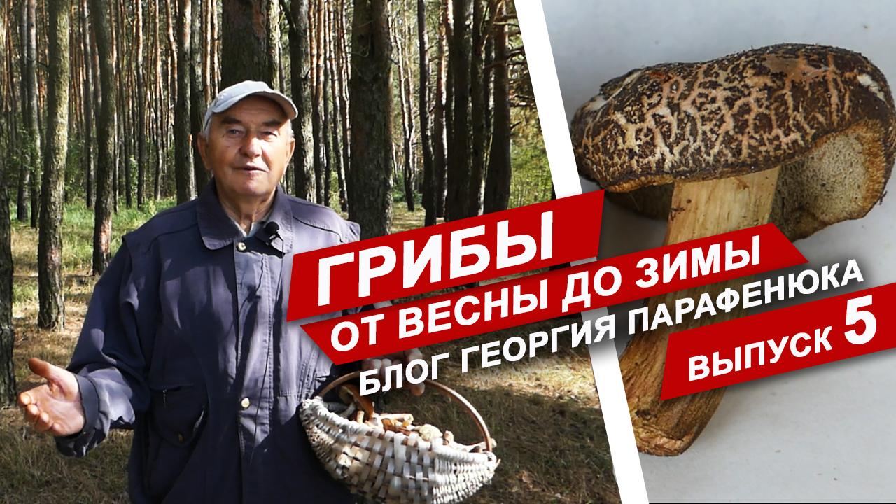 Грибы от весны до зимы. Выпуск 5. Блог Георгия Парафенюка