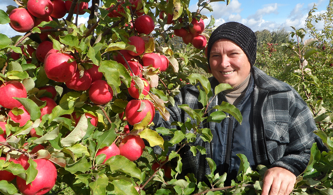 Яблочная  «уборочная»