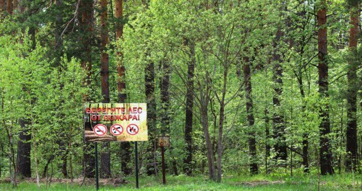 В Каменецком районе ввели запрет на посещение лесов