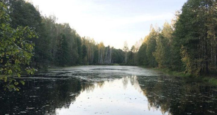 В Беловежской пуще до 2023 года ограничат любительское рыболовство