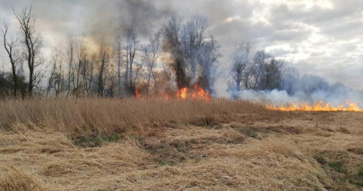 Опять на Лесной кто-то устроил поджог?