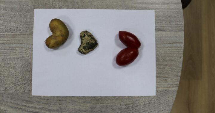 Каменчанка в своем огороде обнаружила три «сердечка»