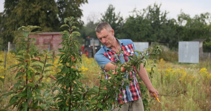 Брестчанин создал свой грушевый питомник в Каменецком районе