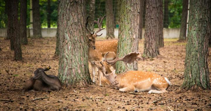 Акция «Чистый лес» пройдет в Беларуси 17 октября