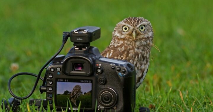 В эту субботу пройдет чемпионат Беларуси по фотобёрдингу