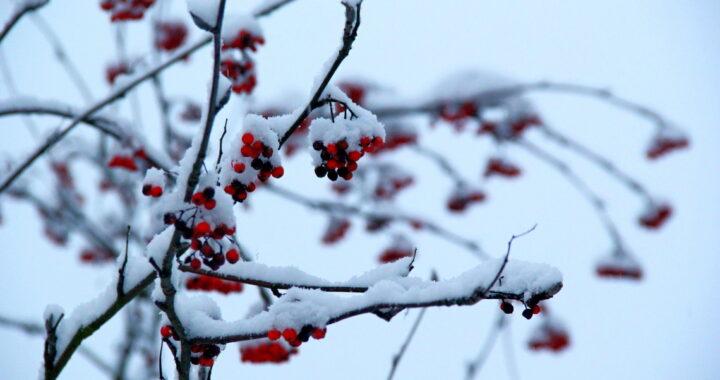 Погода в Каменце и Высоком на неделю 30 ноября — 6 декабря