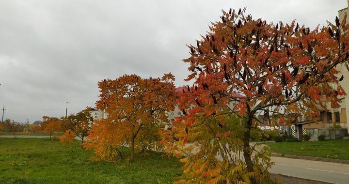 По-осеннему дождливо: погода в Каменце и Высоком со 2 по 8 ноября
