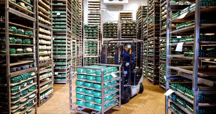 В Каменце в сутки выпускают более 13 тонн сыра