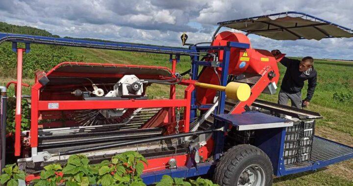 Рядом с Высоким фермеры развивают свой ягодный бизнес