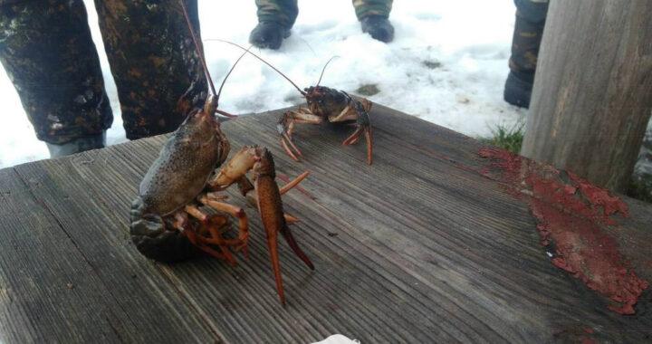 На зимней рыбалке в пуще вытащили рака