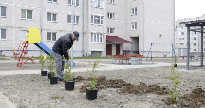 Около 70 саженцев высаживают коммунальники у нового дома в Каменце