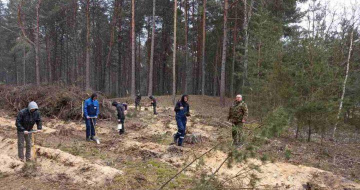 «Неделя леса»: вместе за зелёную Беларусь