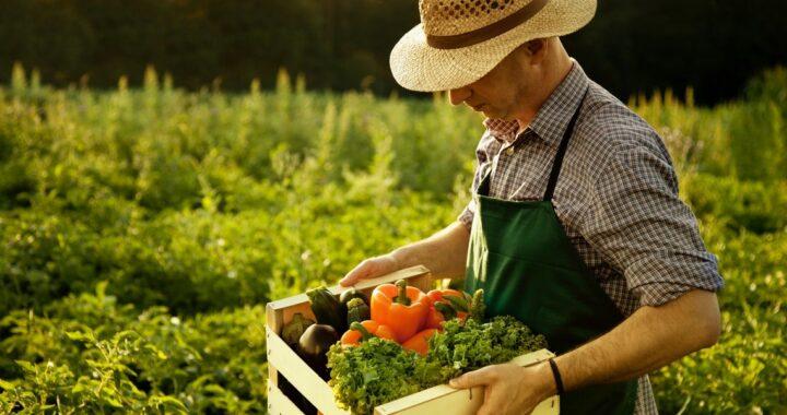 Фермеры в Каменецком районе предпочитают заниматься растениеводством