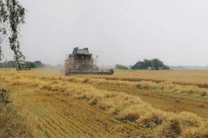 Уборка зерновых в Каменецком районе