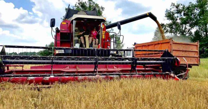 Сельское хозяйство Каменецкого района в цифрах
