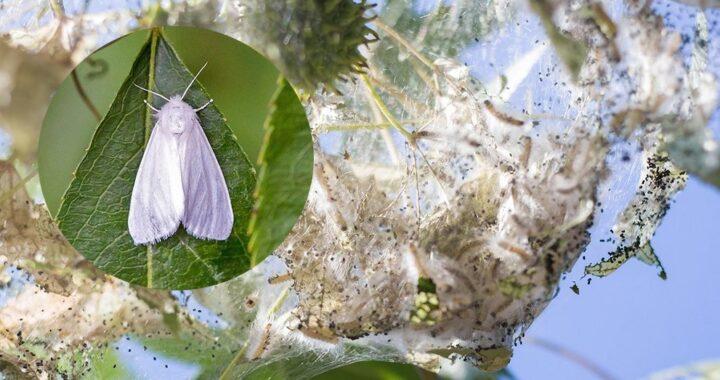 Берегитесь белых бабочек