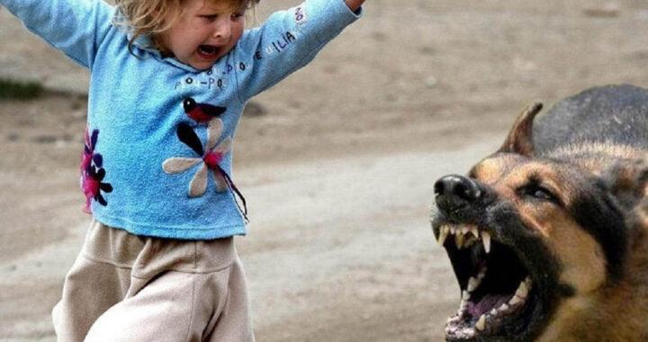 В Каменецком районе собаки кусают людей. А где корень зла?